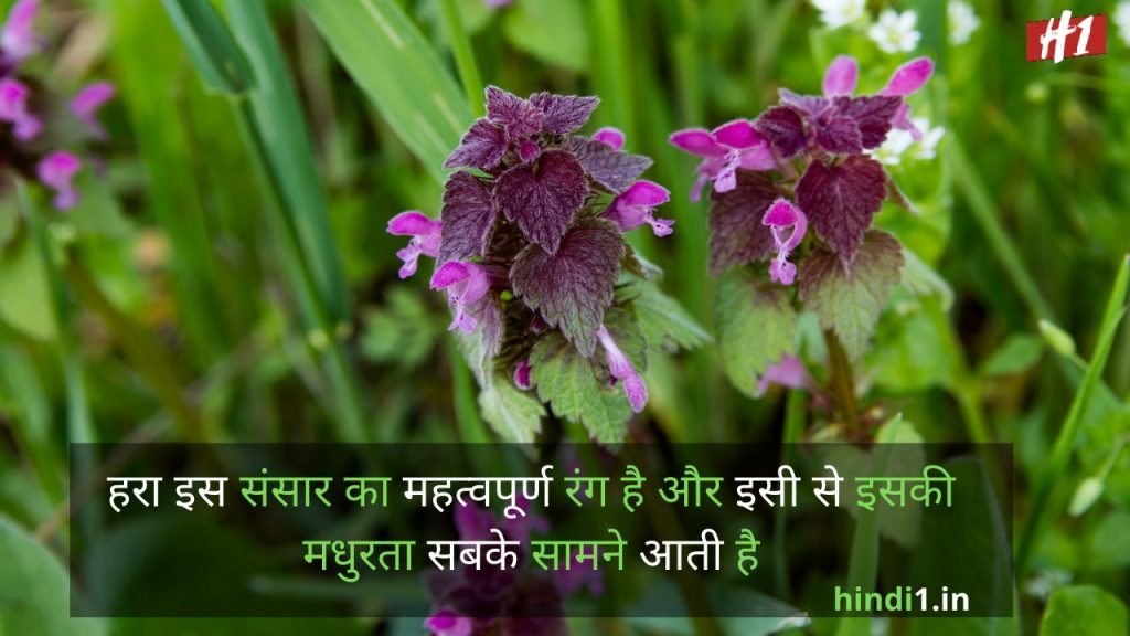 Nature Thoughts In Hindi2