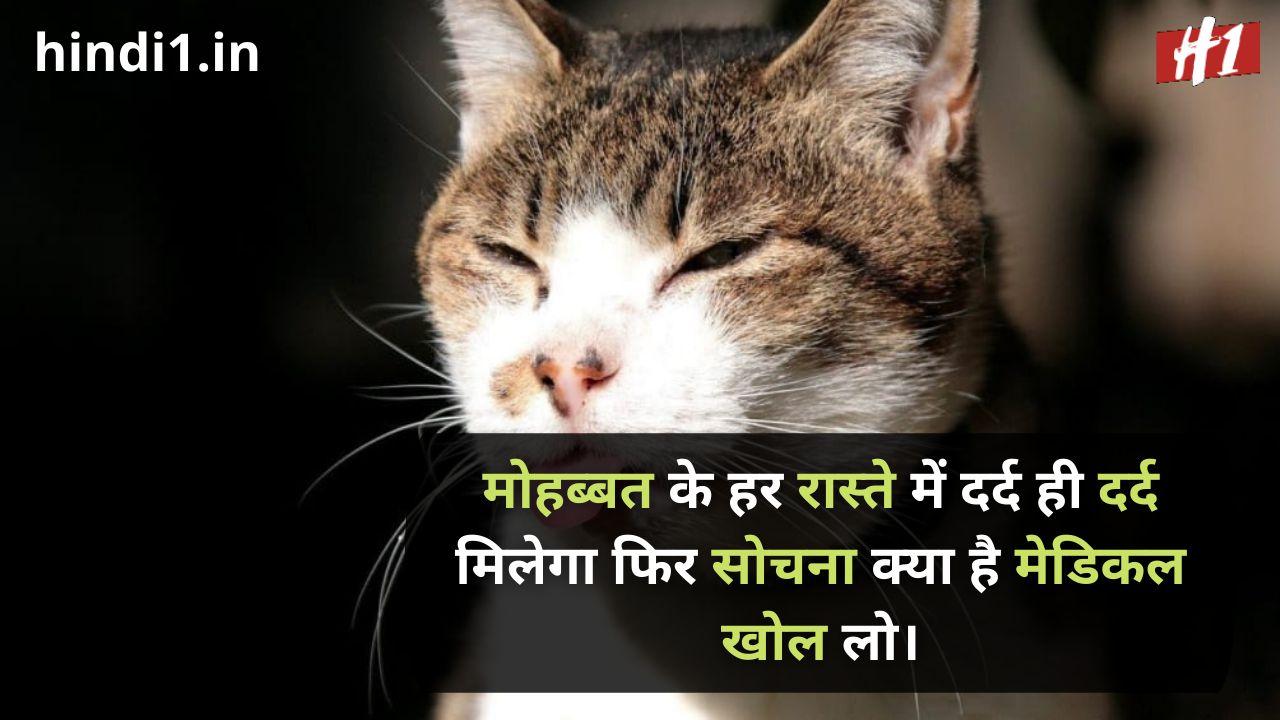 funny dosti status in hindi1