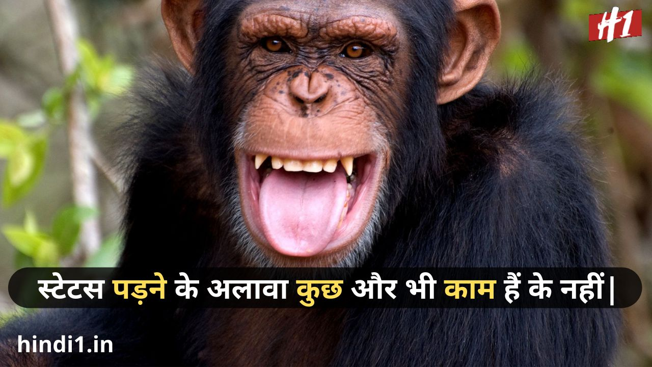 funny status in hindi for boy4