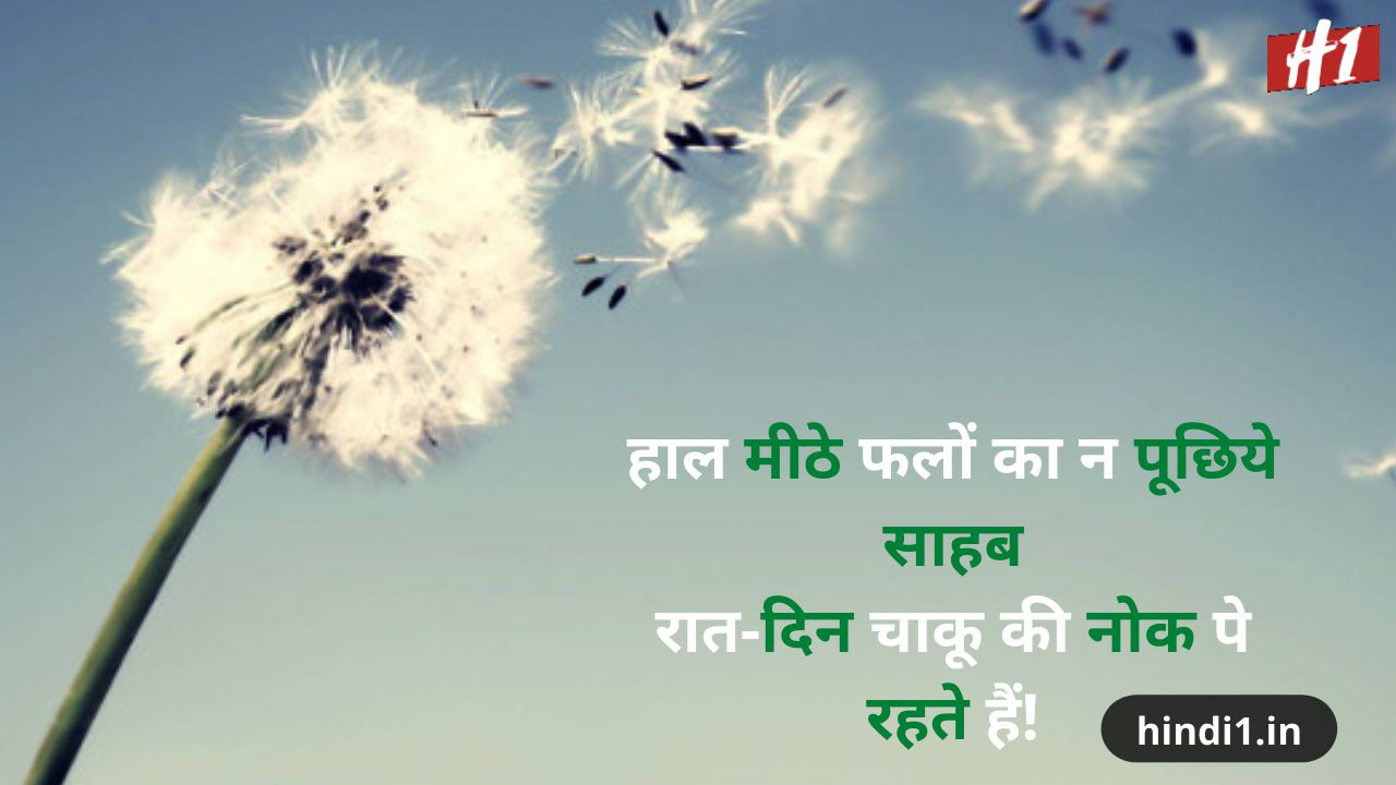hindi status for life5