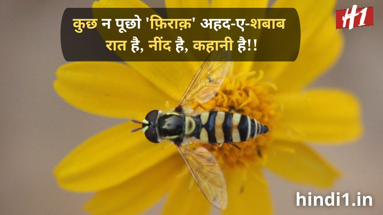 urdu shayari in hindi love5